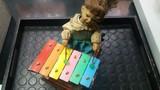 muñeca con xilofono - foto