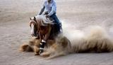 QUARTER HORSE PARA CUBRICIONES - foto