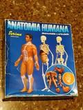 Anatomia humana de serima - foto