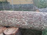 mantenimiento jardines trabajos forestal - foto