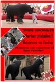 encierros taurinos - foto