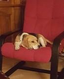 RESIDENCIA CANINA FAMILIAR - foto