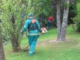 jardinería y servicios - foto