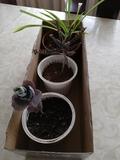 LOTE 3 PLANTAS - foto