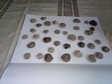 Fósiles de nummulites. - foto