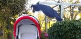 Sombrilla para silla de paseo - foto