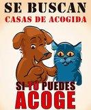 * NESECITAN CASAS DE ACOGIDA MADRID - foto