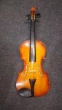 Violin Parrot - foto