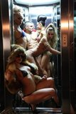Gogos show gogos trasformistas fiestas - foto
