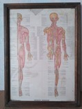 Anatomia. Angelo Farina - foto