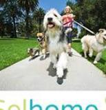 Trabajo cuidador de perros RE605 - foto