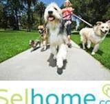 Trabajo cuidador de perros RE950 - foto