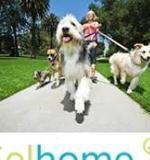 Cuidamos tus mascotas RF393 - foto