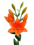 Flores Frescas Directamente a Tú Destino - foto