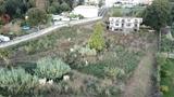 Desbroce,jardinería en general y podas - foto