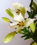 Flores Frescas - foto
