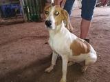 cachorros perros jabali - foto