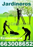 Jardineros economicos - 663008652 - - foto