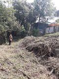 Desbroce forestal y jardineria +poda - foto