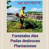 Forestales.  alex - foto
