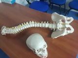OSTEOPATIA  Y TRAUMATOLOGIA - foto