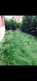 Limpieza de bajo con jardin - foto
