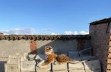 Tigre de peluche color marrón - foto