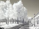 Cámara digital modificada infrarrojo - foto