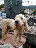 Cachorros de jabali - foto