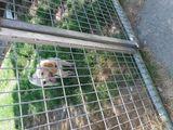 Cachorro 5 meses griffon - foto