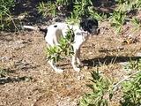 Cachorra pointer - foto