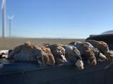 Tarjetas caza menor burgos - foto
