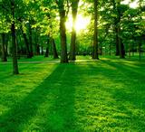 Consultoría medio ambiente ambiental - foto