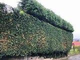 jardineria astur,., - foto