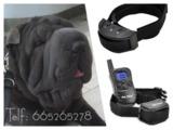 sfc. Collar de adiestramiento perros - foto