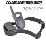 iu01. Collar de adiestramiento perros - foto