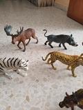 animales - foto