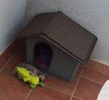 CASETA DE PERRO - foto