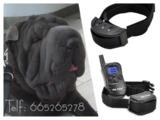 dx8c. Collar de adiestramiento perros - foto
