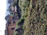 Limpieza parcelas y jardineria +forestal - foto