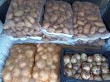 Venta de patatas, cebollas y ajos. - foto
