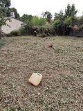 Limpieza tala desbroce jardines forestal - foto