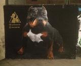 Se realizan graffitis murales decoracion - foto