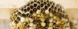 Se eliminan avispas abejas y plagas - foto