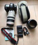 Canon D5 MARK II + Canon Lens EF 100-400 - foto