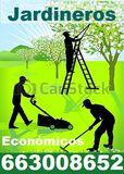 Jardineros economicos 663008652 - foto