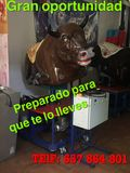 Toro mecanico !! - foto