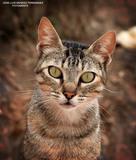 Fotografía profesional de mascotas - foto