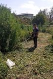 Limpiezas  de zarzas hierbas - foto