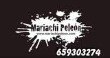 Mariachi en las palmas - foto